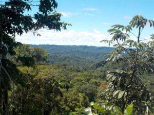 Ecuador_Dschungel_1