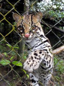 Tiere_in_Ecuador_1