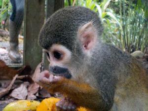 Tiere_in_Ecuador_2
